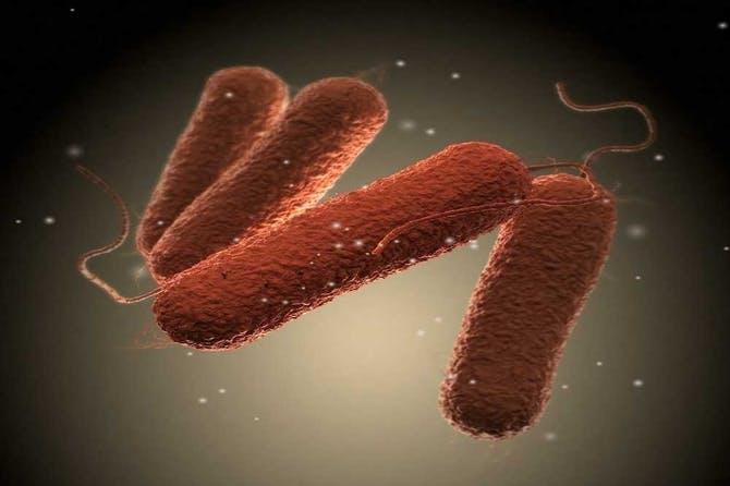 أعراض جرثومة السالمونيلا salmonella